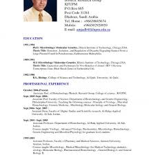 american format resume resume templates free doc resume template and in
