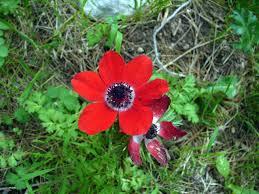 anemone photo albums summitpost