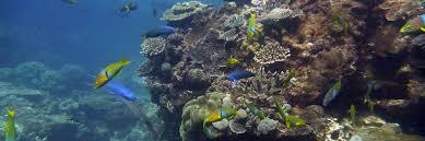chelsea korpanty marine palaeoecology