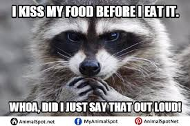 Meme Pun - bad pun raccoon meme mne vse pohuj
