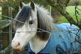 hairstyles for horses 20 horses with better hair than you