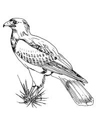 hawk coloring pages download print hawk coloring pages