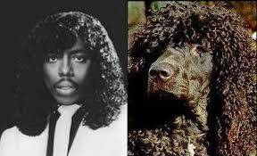 afghan hound look alike breeds 10 celebrities with dog lookalikes popcrunch