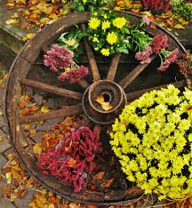thanksgiving season free images leaf purple botany yellow garden flora season