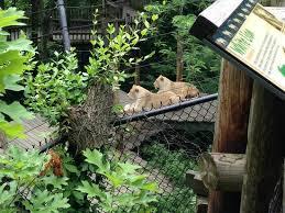 Botanical Garden Cincinnati Bengal Tiger Habitat Picture Of Cincinnati Zoo Botanical