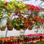 Best Plants For Hanging Baskets by Hanging Basket Ideas Pots Plants Flower Lentine Marine 53960