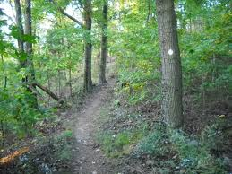 hiking on the siltstone trail in the tom wallace recreation area