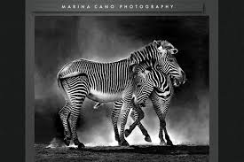 Photography Portfolio 25 Inspiring Portfolio Websites Of Wildlife Photographers An
