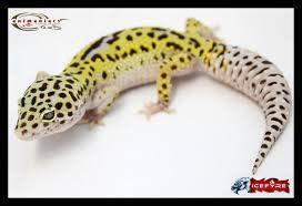 halloween mask leopard gecko leopard geckos animaniacs