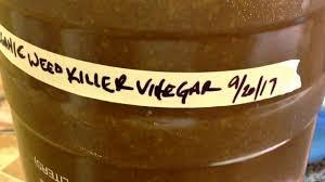 the best organic weed killer vinegar step one kitchen scraps