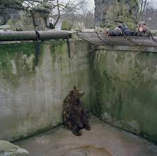 Zoo Resume Esta Impactante Fotografía Resume La Tristeza De Los Animales De
