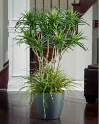 silk u0026 artificial floor plants for business and home interiors at
