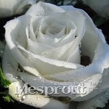 Fragrant Potted Plants - online get cheap fragrant white flowers aliexpress com alibaba
