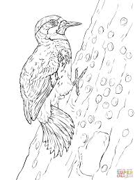 red headed woodpecker coloring page free printable coloring pages