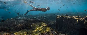 our oceans our future the nature conservancy