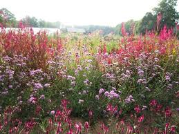 native meadows natural landscaping and landscape design in the