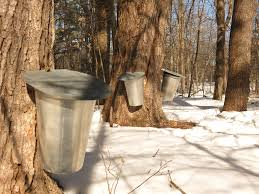 can small scale maple sugaring be profitable u2014 practical self