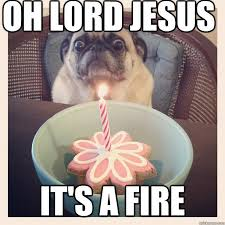 Oh Sweet Jesus Meme - so hilarious oh lord jesus pug lol pinterest hilarious lord