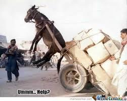 funny donkey by foxtrick9 meme center