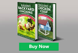 Guide To Raising Backyard Chickens by Announcing Raising Backyard Chickens The Complete Beginner U0027s Guide