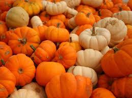 cute pumpkin halloween wallpaper cute pumpkin halloween wallpapers wc16p wallchest