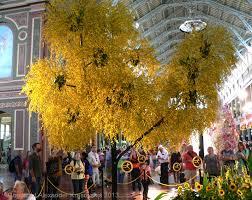 aggregata plants u0026 gardens visit to the melbourne international