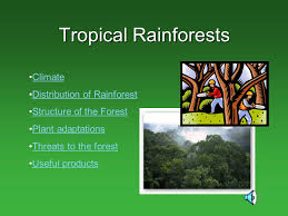 Adaptations Of Tropical Rainforest Plants - tropical rainforests climate distribution of rainforest ppt