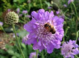 in the garden mason bees are powerful pollinators d magazine