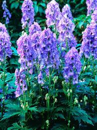 cottage garden plants from hgtv hgtv