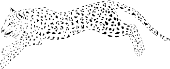baby cheetah for coloring pages coloring home