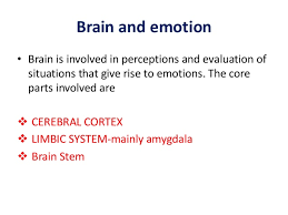 Part Of The Brain Stem That Is Involved In Arousal Neurobiology Of Emotion