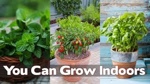 15 edible plants you can grow indoors youtube