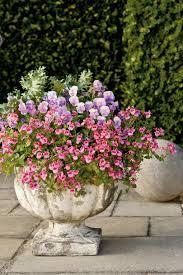 bulb garden layout pansies u0026 viola gardens southern living