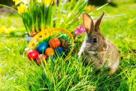 bunny easter 10 things you may not about the easter bunny mental floss