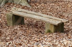 free photo bank forest nature old bench free image on