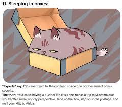 Sleeping Cat Meme - cat truth sleeping in boxes cat meme cat planet cat planet