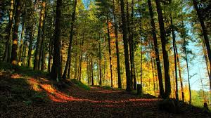 trees fall autumn forest sunlight path trees landscapes nature hd