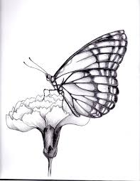 drawings of flowers and butterflies my drawing of a butterfly by
