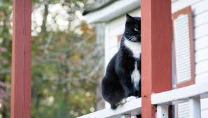how to keep cats away with home remedies animals me