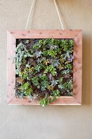 Best Plants For Vertical Garden - succulent vertical garden gardening ideas