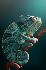 128 best reptiles images on pinterest lizards reptiles and
