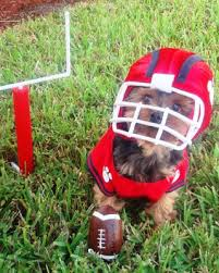 53 of the cutest halloween costumes for dogs small dog halloween