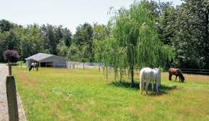 creating the perfect horse paddock expert advice on horse care