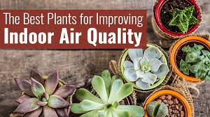 best plants for air quality 191028