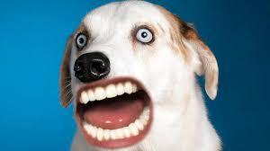 Dog Teeth Meme - woof youtube