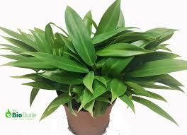 tropical plants for sale for bioactive terrariums vivariums