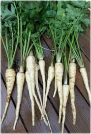 water your vegetable garden for optimal performance farm and dairy
