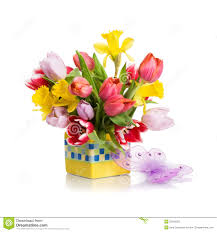 tulips and daffodils royalty free stock photography image 23043357