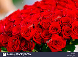 big bouquet of roses big bouquet with lot of roses stock photo 97115908 alamy