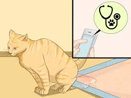 3 ways to clean a litter box wikihow